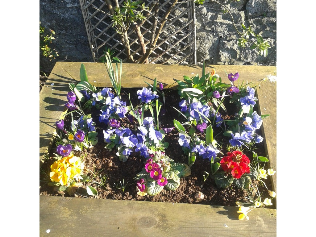 flower box  in spring 1