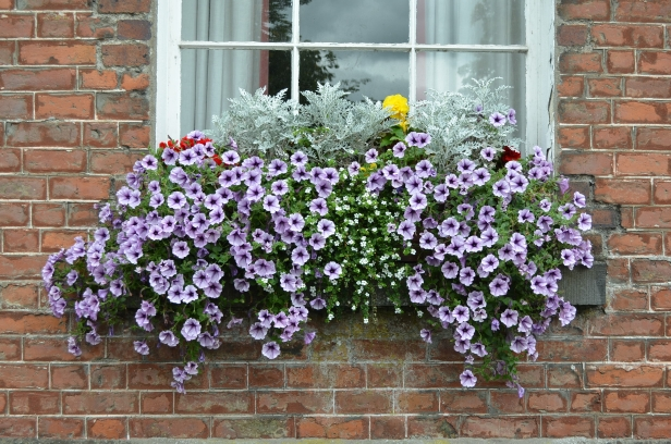 Attractive window box. copyright: Keep Kilkenny Beautiful.