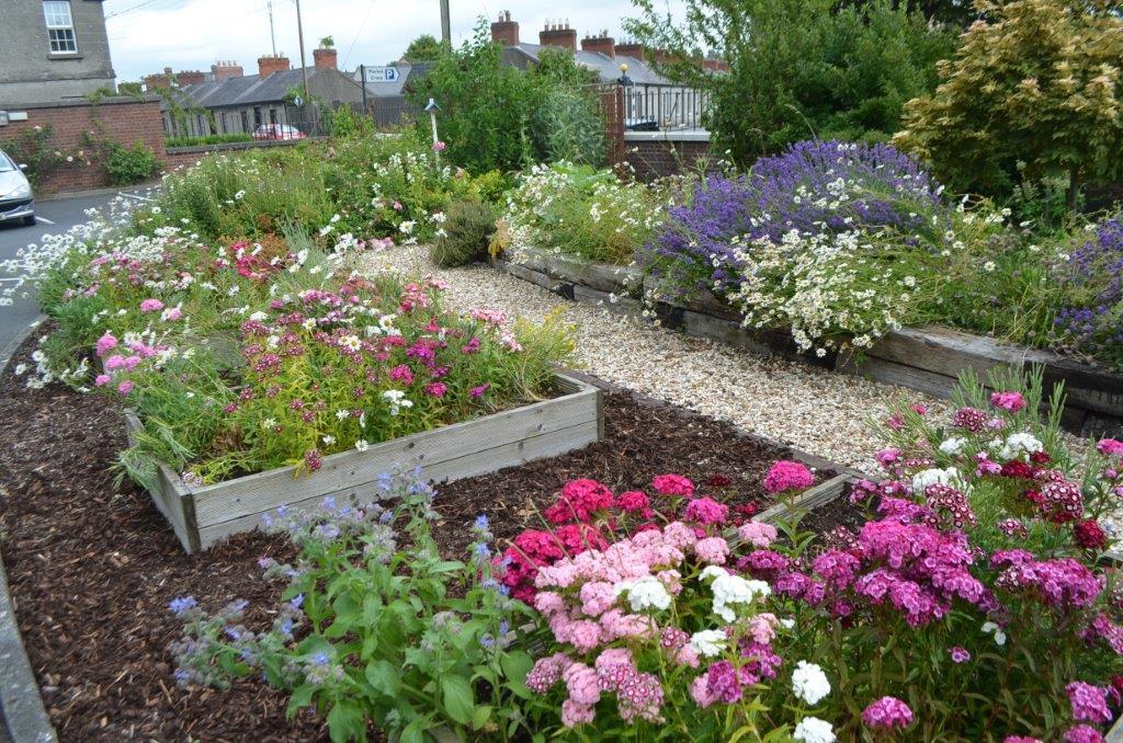 Wild Flower Garden At Kilkenny CBS Primary School.