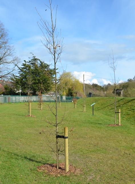 tree planting 3-