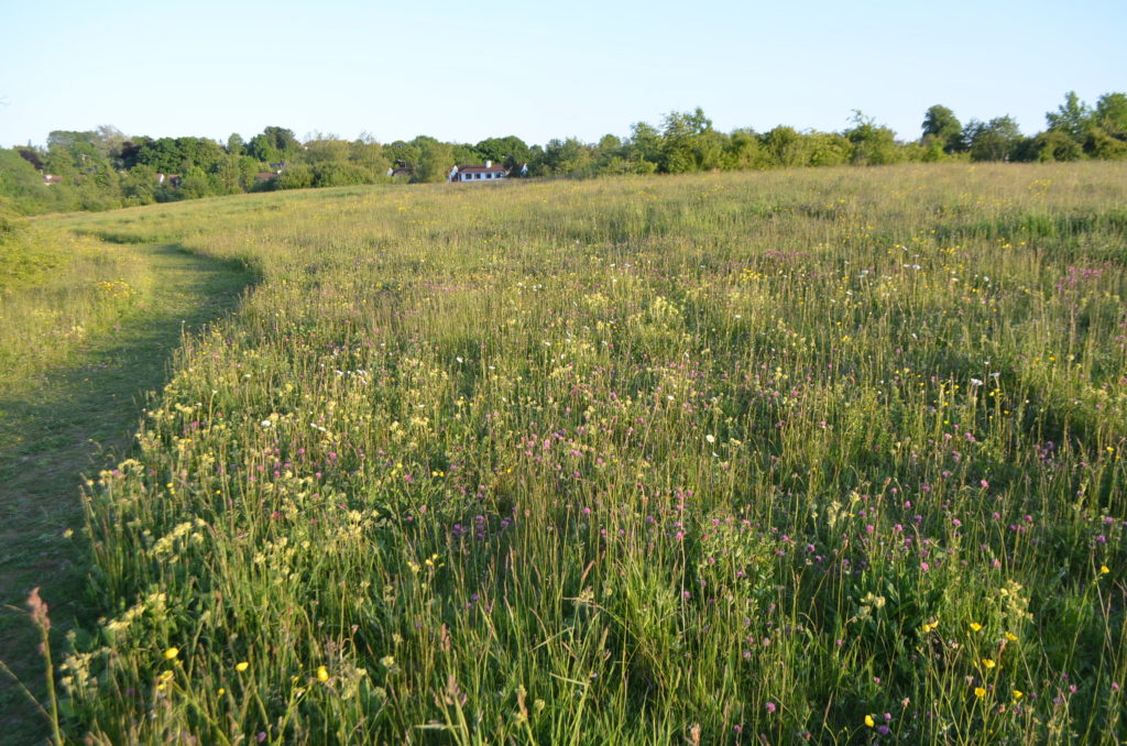 Dukesmeadow wild flower meadow located off the Bennettsbridge road.