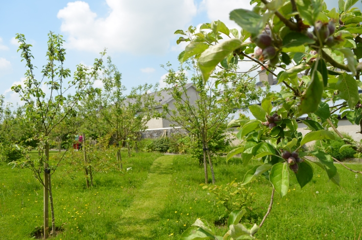 Rothe orchard, the grass is being left uncut to encourage wild flowers